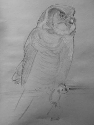 owl_small
